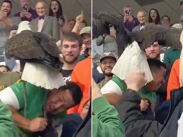 Notre Dame fans 'scared crapless' by bald eagle at Cotton Bowl