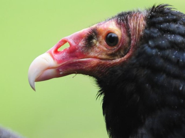 The Vultures Will Inherit the Earth