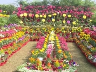 Flower Show Themed 'Covid Vaccination Drive' Attracts Nature Lovers