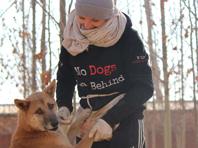 'Ferocious' Dog Saved From Dog Meat Festival Learns To Trust People Again