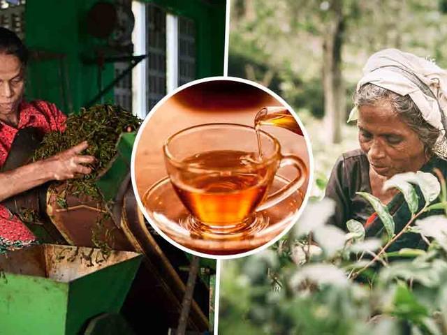 Discover the Health Benefits of Darjeeling Tea