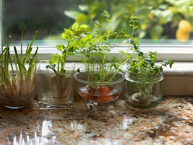 How to Grow Plants and Vegetables From Kitchen Scraps