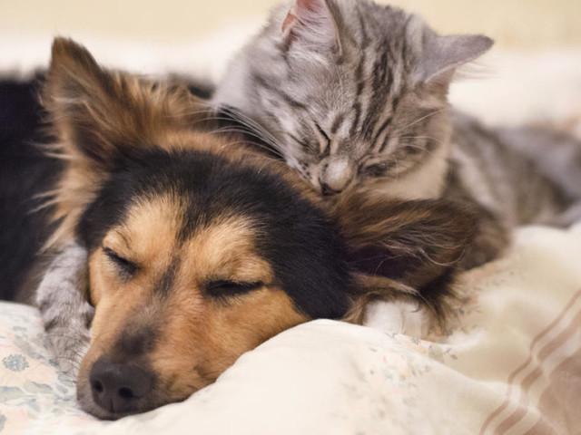Trump Signs Bill Making Animal Cruelty A Federal Felony