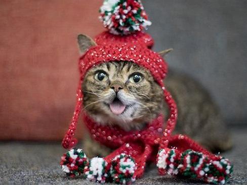 Internet celebrity cat Lil Bub has died