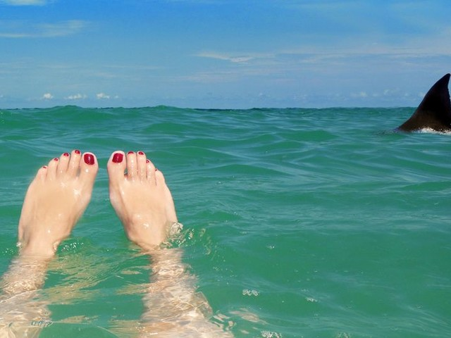 Shark Attacks, 'Dry Drowning,' and Other Summer Horror Stories