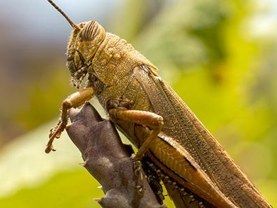Is It Dangerous To Have Crickets In My Washington D.C. Home?