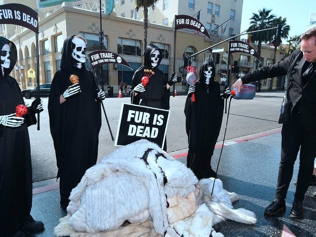 The California Fur Ban and What It Means for You