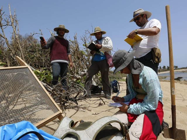 Scientists race to document Puerto Rico's coastal heritage