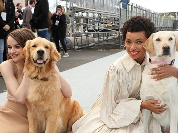 The 2020 SAG Awards Red Carpet Gets Rolled Out By the Most Adorable Dogs