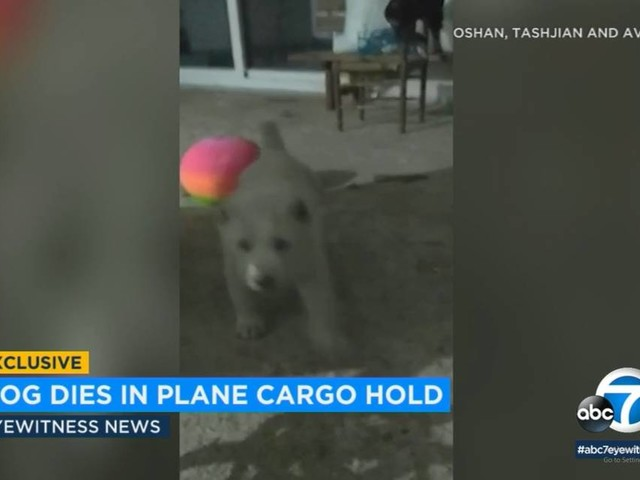 Puppy dies on plane to his new California home. 'I don't know what to say to my kids'