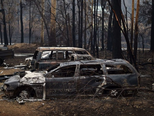 Athletes are helping victims of Australia's bushfires. Here's how you can, too