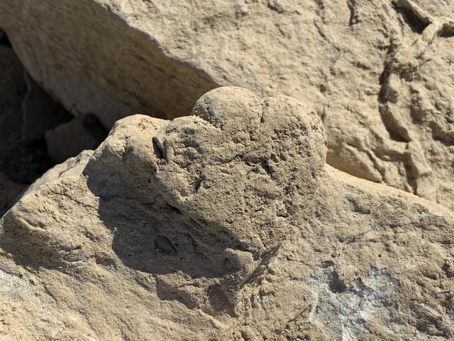Tiny cat-sized stegosaur leaves its mark
