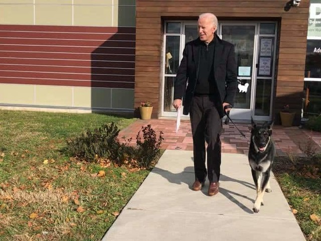 Biden sprains ankle while playing with his dog Major, office says