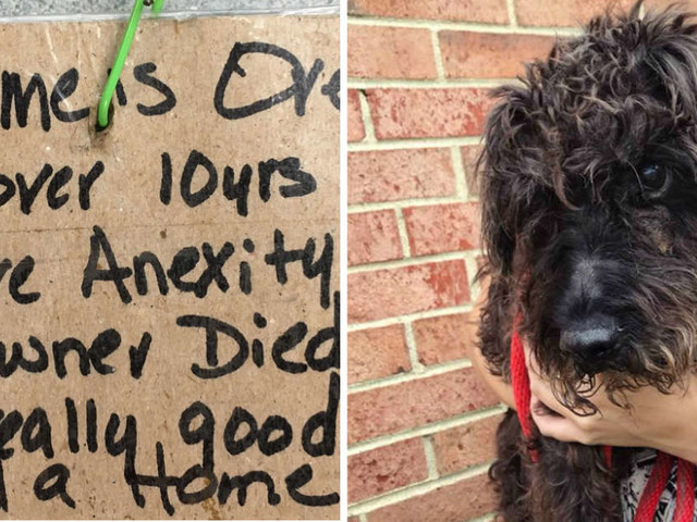 Senior Dog Tied To Street Pole With Saddest Note About His Past