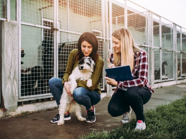 A Budgeting Guide for Pet Owners