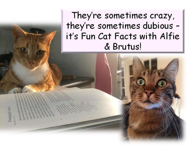 Fun Facts with Alfie & Brutus: Trainable Cats