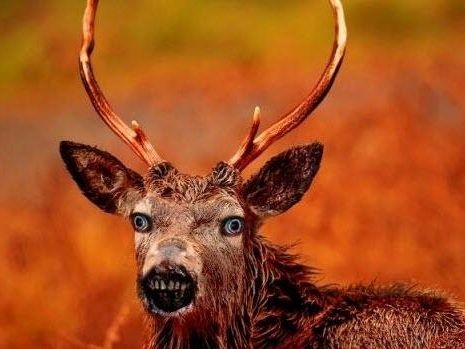 "Zombie Deer Disease Rears Its Ugly Head: Canada Issues Stark Warning About ""Always Fatal"" Infection"