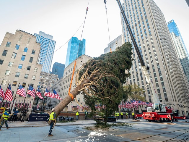 Rockefeller Center's scraggly Christmas tree is deemed 'a metaphor for 2020'