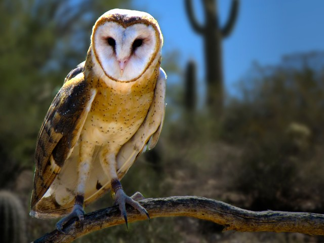 The 12 Songs of Arizona Christmas: Two Turtle Doves