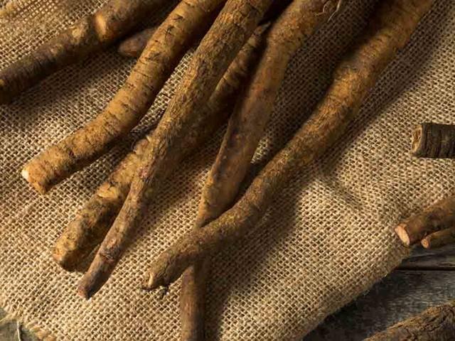 Burdock Root: Bitter in Taste, but Sweet on Health Benefits