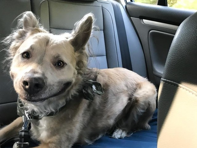 Shelter Dog Flashes Sweetest Smile To Make His New Mom Fall In Love With Him