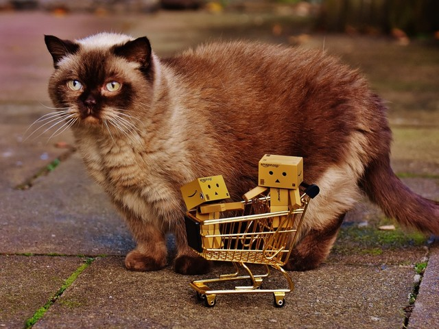 Comment on Feline Generous? Shoppers Asked to Raise Cash For Kitties by catladymac