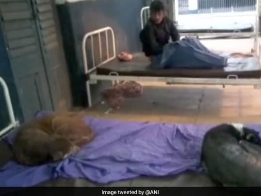 Dogs Sleep On Hospital Beds In Bihar, Patients Complain