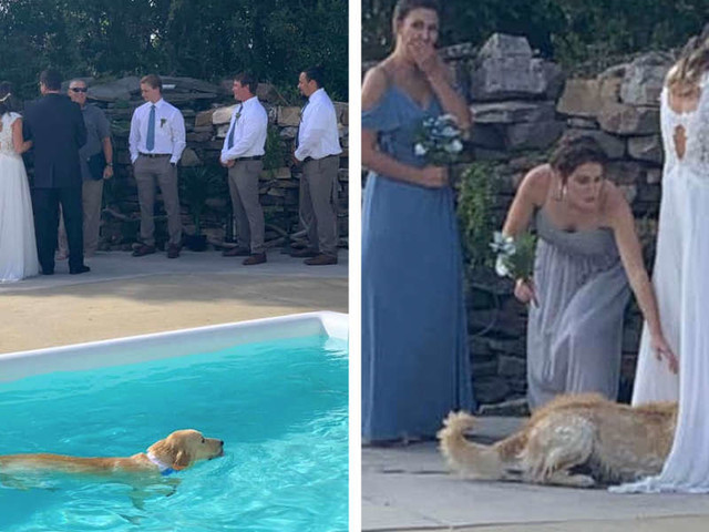 Dog Takes Swim During Wedding And Picks The Very Worst Place To Dry Off