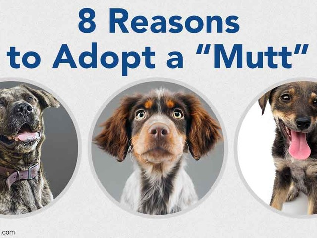 8 Terrific Reasons to Adopt One of These Lovable Animals Today
