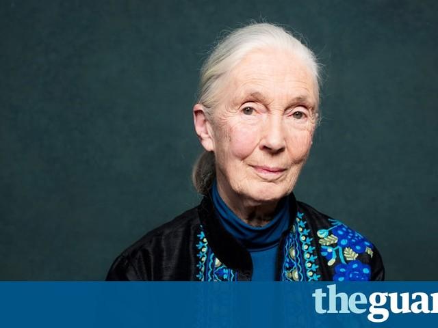 Primatologist Jane Goodall: 'Tarzan married the wrong Jane'