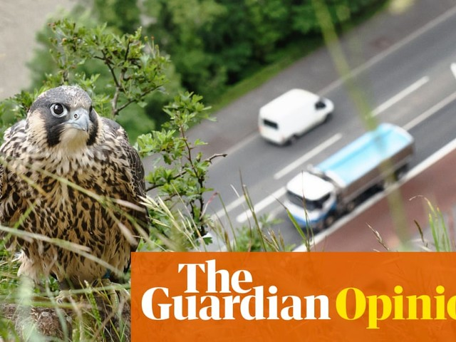 We need to protect nature to stand any chance of tackling climate chaos | Caroline Lucas