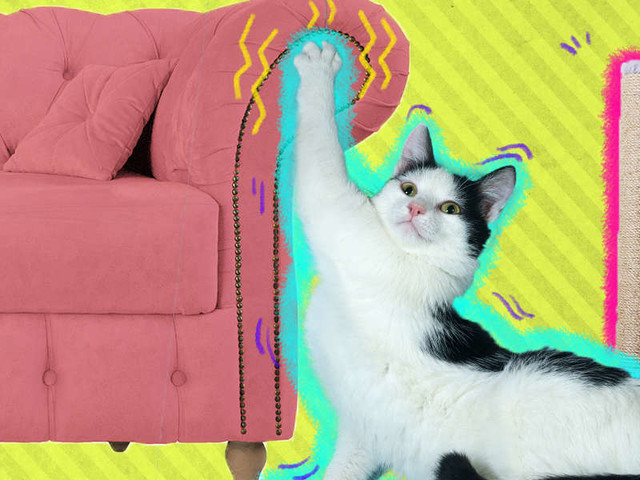 Why Does My Cat Keep Scratching My Couch?