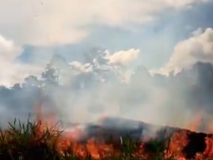 Amazon on fire: 'The earth isn't dying. It's being killed.'