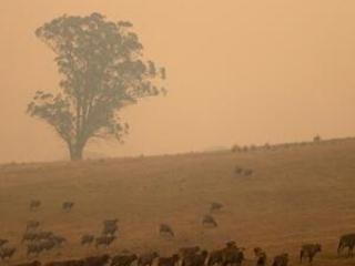 Firefighter dies as Australia works on long-term battle plan