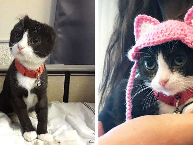 Someone Stole This Kitten's Ears — So A Nice Person Made Her New Ones