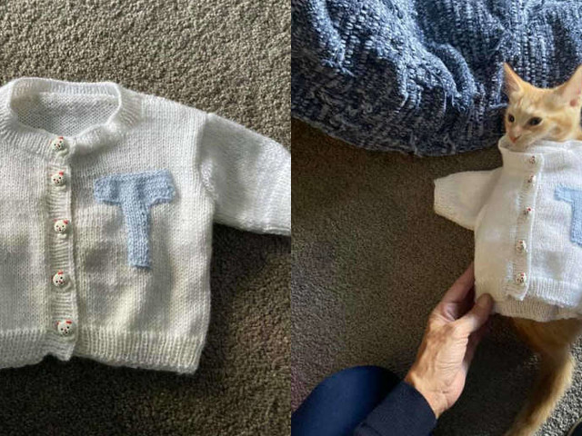 Woman Without Grandkids Knits A Sweater For Her 'Grand Cat' Instead