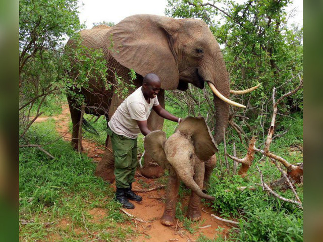 Wild Elephant Brings Her New Baby To Meet The People Who Saved Her Life