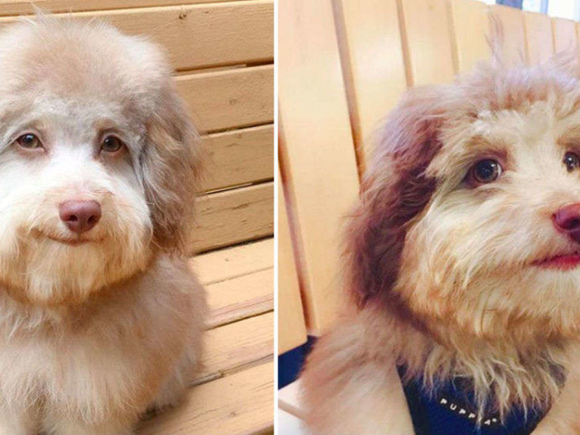 Everyone Is Obsessed With This Dog With A 'Human' Face