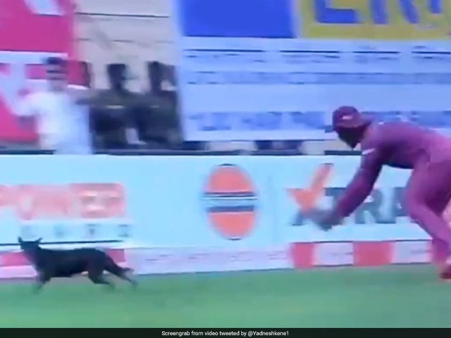 Watch: India vs West Indies 1st ODI Paused After Stray Dog Invades Ground