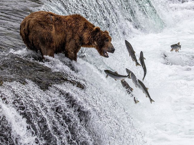 They Sidestepped Disaster With Bears, Now Are Charged