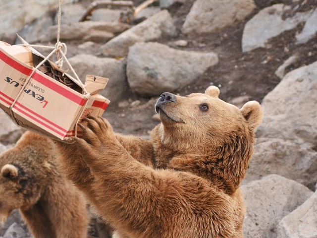 Bears Saved From Worst Owners Can't Believe How Many Treats They Get Now