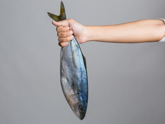 Fish experience pain like humans