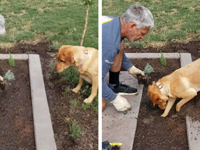 Gardener Has A Special Way Of Planting Things Without A Shovel