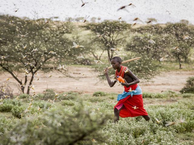 Climate change behind Africa's worst locust invasion in decades