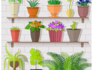 Every Question You Have About Your Houseplants, Answered