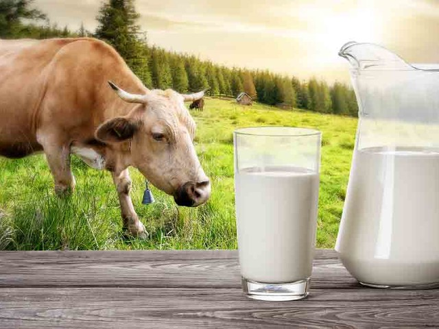 Bill Proposed to Ban Drinking Milk From Hoofed Animals