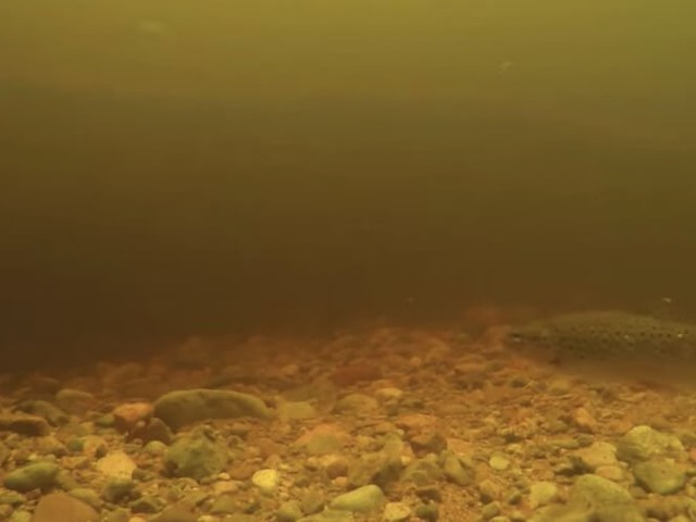 New Loch Ness monster video may just confirm giant eel theory