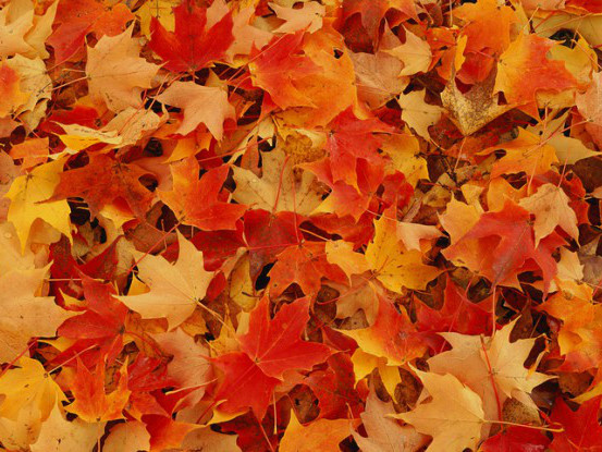Move Over Summer, Here Comes The Fall Equinox