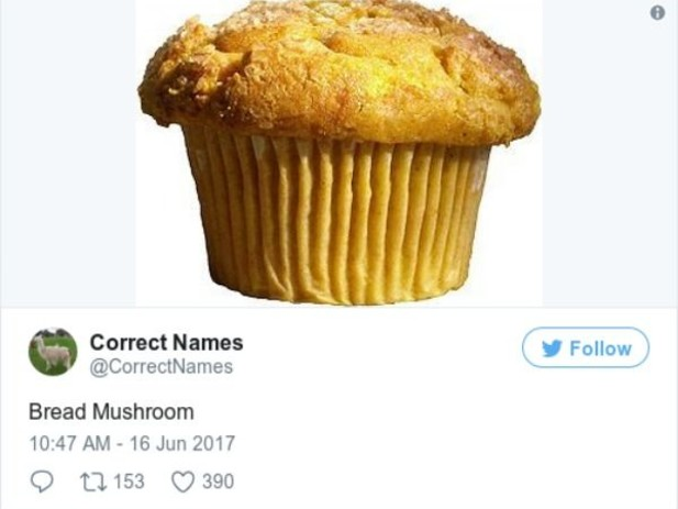 Twitter Account Shares Correct Names For Everyday Objects