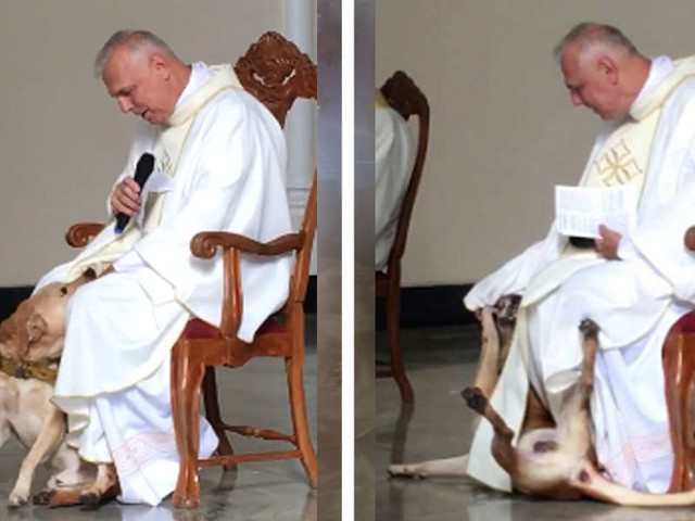 Priest Has Best Reaction After Playful Dog Crashes Church Service